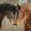 horsekin: (Default)