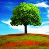 sapfir_jer: (дерево)