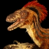 halialkers: Velociraptor mongoliensis with light and dark brown feathers, red plume (Revcel)