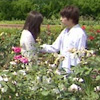 estirose: Mio and Taiga in a garden (King and Queen - KR Kabuto)