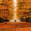 jaxadorawho: (Seasonal ☆ Autumn ~ woodsy walk)