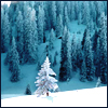 solaciolum: A tree, a mountain, snow; blessed art thou, amen. (benedicta tu)