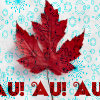 alternate_ds_c6d: red maple leaf on snow captioned with AU! (Default)