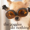"ladyvyola: small dog wearing goggles says ""the goggles do nothing"" (my eyes!)"