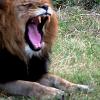 rainorchids: (lion eliot)