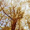 raanve: (Pretty Trees)
