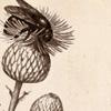 prof_pangaea: (apis mellifera)