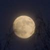 biggelois: (fullmåne)