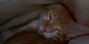 mimi112189: kitty (pic#561309)