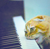 crackedcement: A cat, biting the keys of a piano (Kitteh)