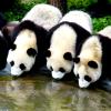 laurose8: (pandas)