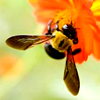 ext_12944: (Bee)