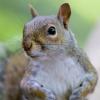 wildmage_daine: (squirrel curious)