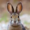 wildmage_daine: (snowshoe hare)