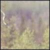 jelaza: (trees)