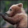jelaza: (bear)