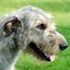wildmage_daine: (hound calm)
