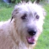 wildmage_daine: (hound happy)