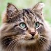 wildmage_daine: (cat observing)