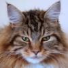 wildmage_daine: (cat calm)