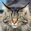 wildmage_daine: (cat annoyed)