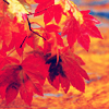 northern_light: red autumn leaves in daylight (Default)