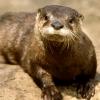 wildmage_daine: (otter calm)