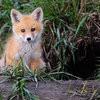 foxesden: (Default)
