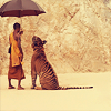 orm: (UMBRELLA: tiger temple)