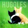 sukiyakiya: (huggle cat)