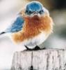 rthstewart: (Angry Bluebird)