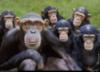 crypto: (chimpanzees)