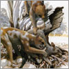 halialkers: Thylacleo with large thumb claw facing upward (U-S-93 Mere)