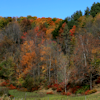 thothmes: Fall foliage at its brightest in a pasture.  The bare trees almost look like mist. (Fall Pasture Trees)