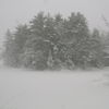 thothmes: A clump of evergreens, seen dimly through snow (Trees through Snow)