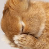 weatherfairy: (:3 bunnyfail)