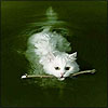 delight: (fetch swim cat)