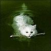 delight: (fetch swim cat)