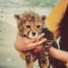 bop_radar: (Tiger cub)