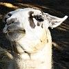 frith: (llama hmph)