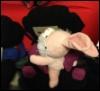 teleporting_bunnies: Me cuddling Daisy! (Bunny Snuggles)