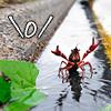 loligo: cheering crayfish! (crayfish)