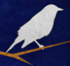 cedarmyna: illustrated image of a white bird on a branch at night (Default)