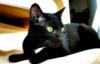bamfingcats: (Momma)
