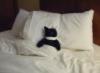 killalla: (Harey Cat)