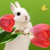 amechan84: (bunny)