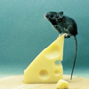 naanima: ([Mouse] On top of a slice of cheese)