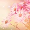 edithjones: (daisies)