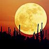 naanima: ([Misc] Red Mooni n Desert)