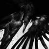 feralkiss: Raven painting. (r_paint)